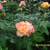 2014-juliusi-viragok-006-f639e0e03634a03375709cbd2960b2cf3584f326