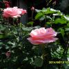 2014-tavasz-nyar-s-016-b688421004df7cd23c9cebc898f2eb8d930ec5e8