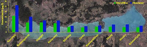 Az algák összmennyiségére utaló a-klorofill (zölddel) és a kékalgák mennyiségét jelző fikocianin (kékkel) koncentrációjának alakulása a Balaton hossztengelyében 2015. július 20-án