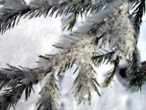 white-christmas-2008-christmas-2908083-800-600